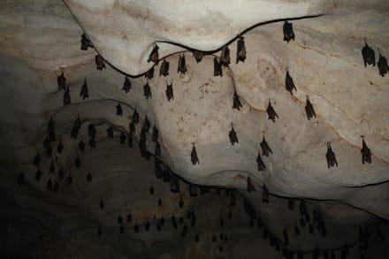 Fledermäuse in der höhle kanchanaburi