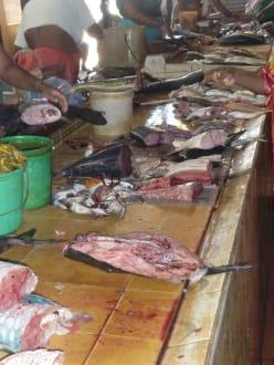 Fischmarkt in Negombo - Fischmarkt Negombo