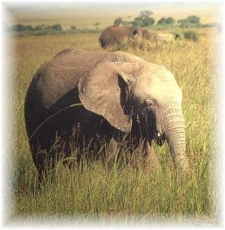 Kenia Masai Mara - Masai Mara Safari