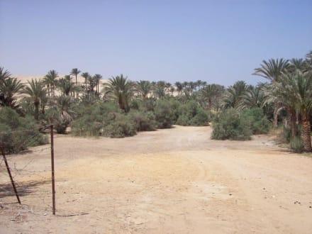 Palmenhein bei Saqqara - Stufenpyramide / Pyramide von Djoser