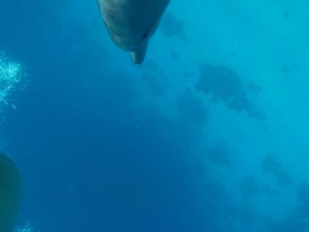 Selber fotografiert  - Delfinschwimmen Delfine & Meer
