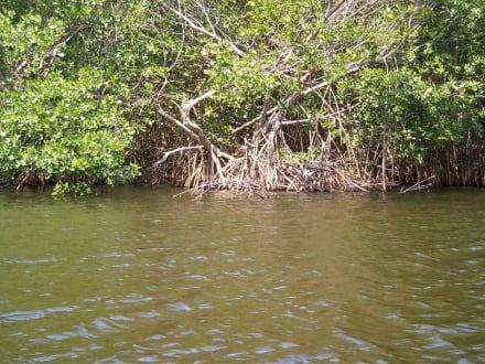 Fahrt durch die Mangroven - Playa Esmeralda - Punta del Rey