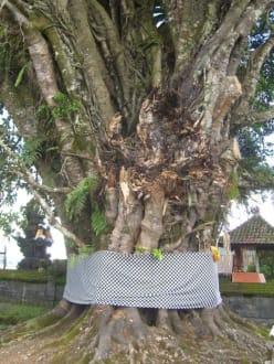 Heiliger Baum - Tempel Pura Ulun Danu Bratan