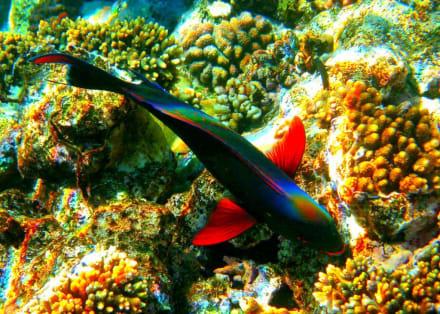 Unterwasserwelt beim Magic Life Hotel - Tauchen Nabq Bay