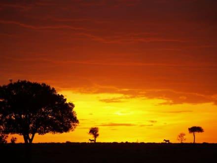 Sonnenuntergang in der Masai Mara - Masai Mara Safari