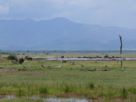 Hippo-Pool im Lake Manyara NP - Lake Manyara Nationalpark