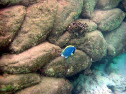 Dori ... - Tauchen Laviyani Atoll