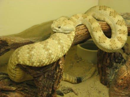 Rattlesnake Museum in Albuquerque - Rattlesnake Museum