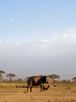 Schwacher Blick auf Kilimanjaro - Amboseli Nationalpark