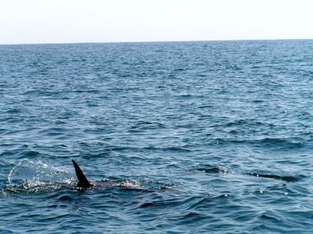Ein Hai? - Delfin Tour Diani Beach