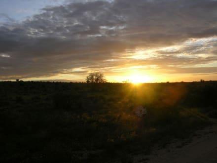 Rückfahrt von der Abend-Safari - Tsavo Ost Nationalpark