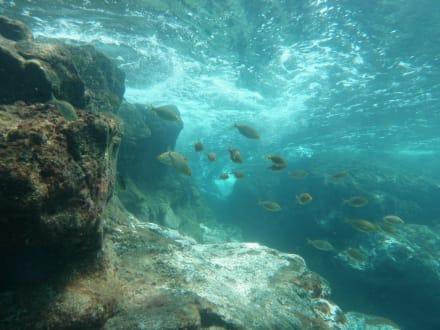 Unterwasseraufnahme Schnorcheln Fuerteventura - Schnorcheln (Watersports Fuerteventura)