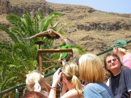 Raubvogelshow - Palmitos Park