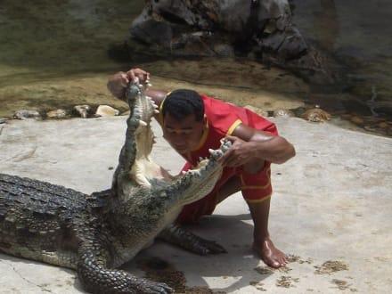 Bangkok - Krokodilfarm
