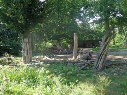Gehege der Tampeltiere - ZOOM Erlebniswelt Gelsenkirchen (Zoo)