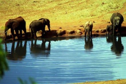 Am Wasserloch. - Tansania