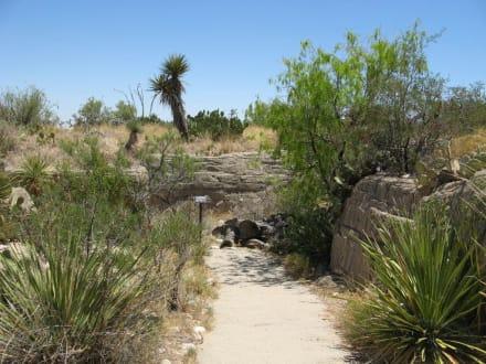 Living Desert Zoo & Gardens in Carlsbad, NM - Living Desert Zoo and Gardens State Park