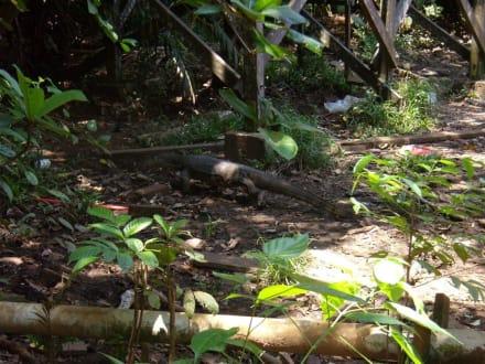 Veran der Extraklasse - Bako Nationalpark
