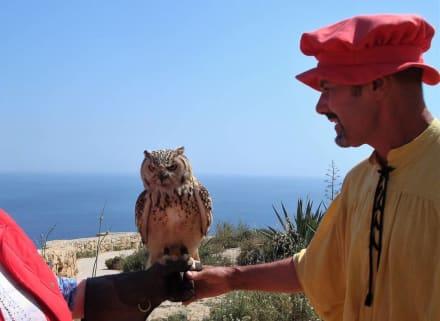 Lawrence und Nina - Inselrundfahrt Malta