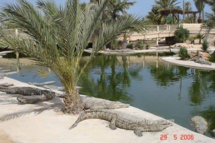 Krokodil - Krokodilfarm Animalia