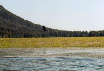 Seeadler aus dem Kajak! - Seakayaking