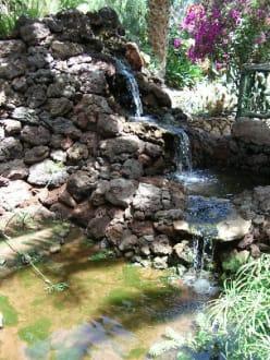 Oasis Park, La Lajita - Oasis Park