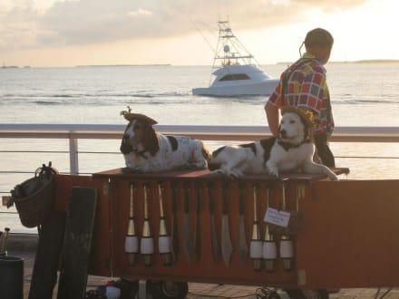 Eine Show mit Hunden - Mallory Square