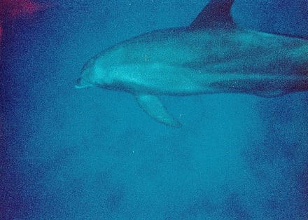 Delphin - Ausflug mit Mohamed