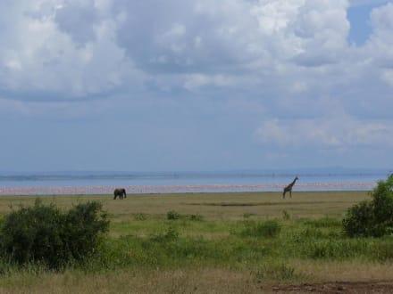 Elefant und Giraffe vor dem Lake Manyara - Lake Manyara Nationalpark