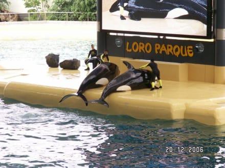 Die Orca Show - Loro Parque