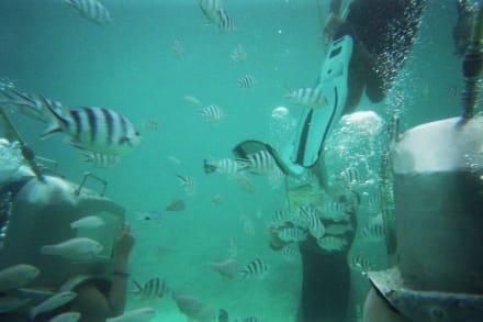 Underseawalk - Under Sea Walk