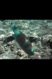 Hotel Reef Oasis Blue Bay - Schnorcheln Sharm el Sheikh