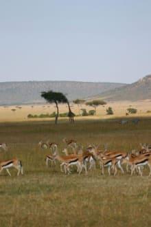 Masei Mara -auf Safari - Masai Mara Safari