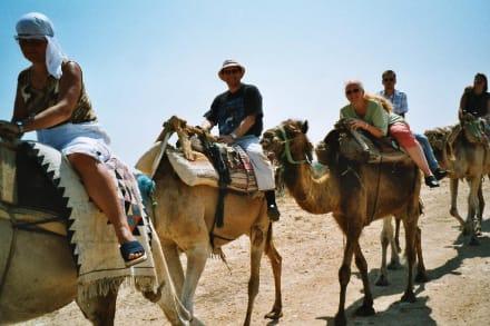 Kamelausflug zur Straußenfarm - Kamelreiten Port El-Kantaoui