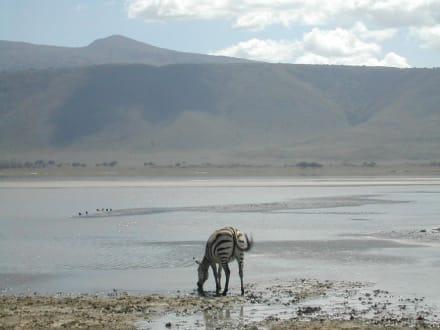 Ngorongoro Nationalpark - Ngorongoro Reservat