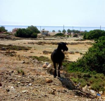 Blick auf den Strand - Strand Tsambika