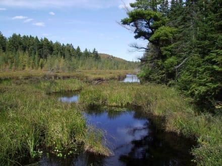 Mizzy -Lake Trail - Mizzy Lake