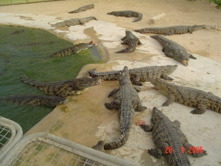 Fütterung der Krokodile - Krokodilfarm Animalia