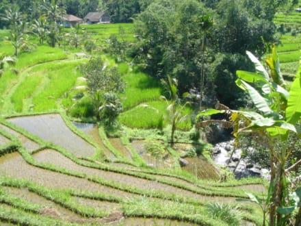 Reisterrasse in den Bergen Balis - Reisterrassen