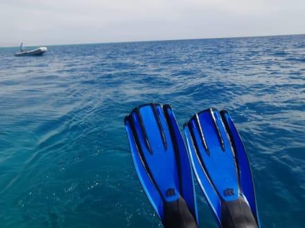 Startklar  - Delfinausflug mit Mo