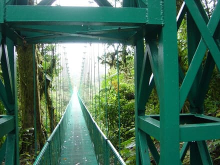 Hängebrücke - Nebelwald-Reservat Monteverde