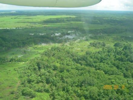 Orinoco Delta - Orinoco Delta