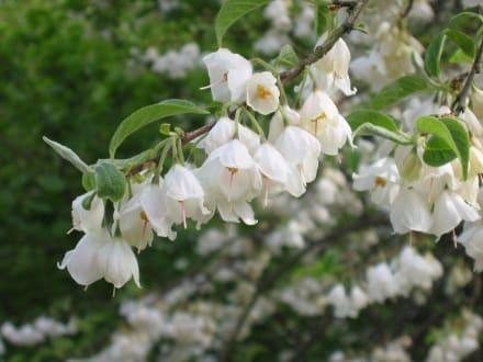 Blütenpracht - Villa Hügel