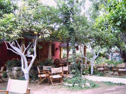 Entspannen - Lemon-Garden (Restaurant)
