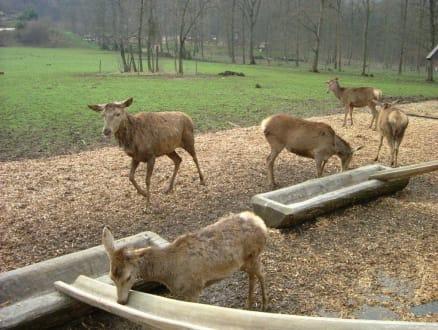 Tiere mit Körner zu Füttern - Wildpark Bad Mergentheim
