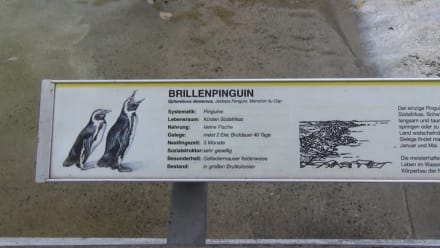 Pinguine - Wilhelma