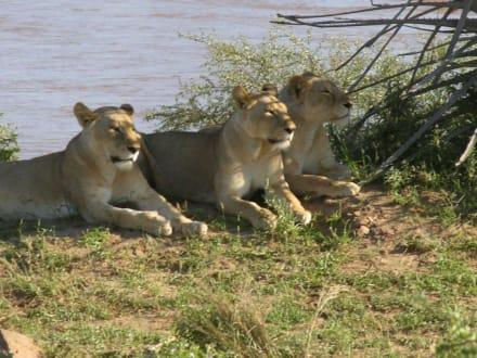 Satt und zufrieden - Tsavo Ost Nationalpark
