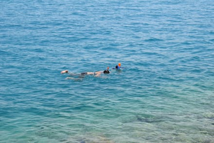 Schnorcheln Hausriff Beach Albatros Palace Resort Hurghada - Schnorcheln Hausriff Beach Albatros Palace Resort Hurghada