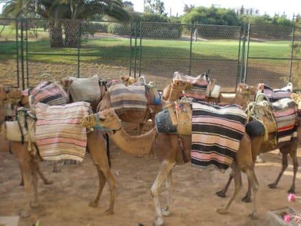 Kameltour - Kamelreiten Port El-Kantaoui
