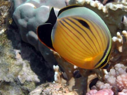 Wunderschöne Unterwasseraufnahme - Schnorcheln Sharm el Sheikh